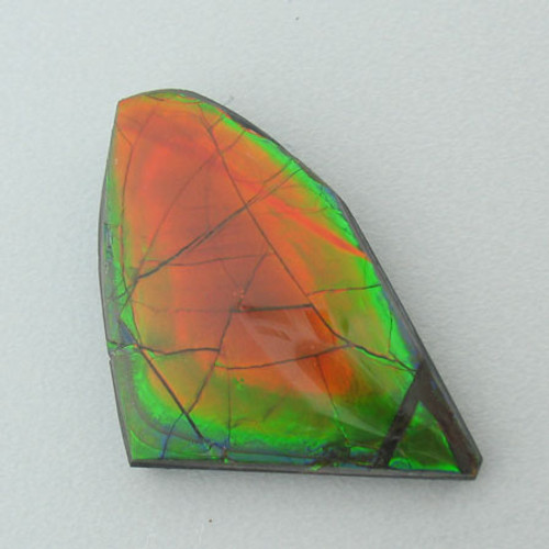 Freeform Ammolite #IT-922