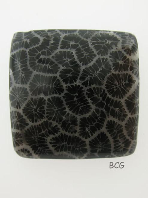Black Coral #C-2016
