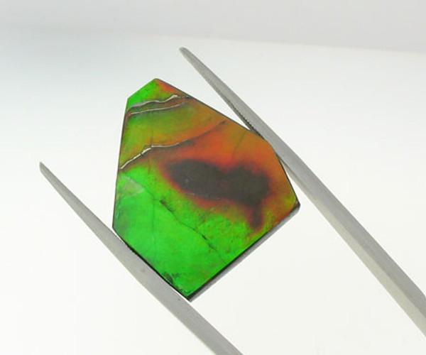 Genuine Natural Ammolite #5004