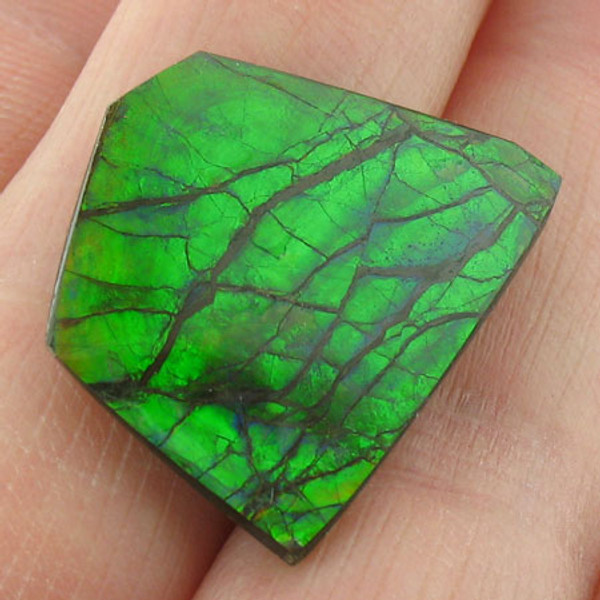 naturally polished Ammolite #IT-830