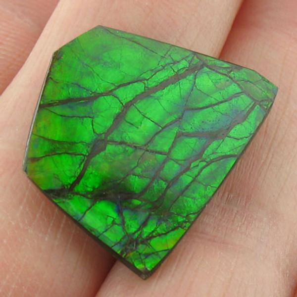 naturally polished Ammolite #IT-830