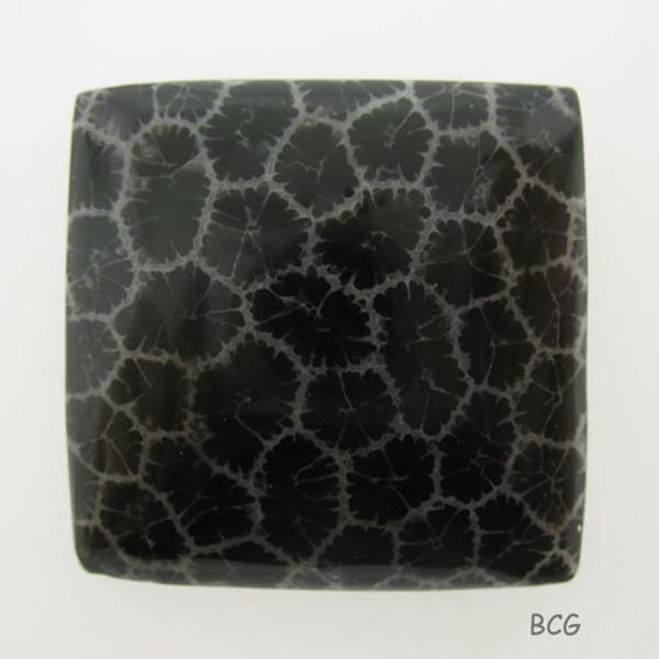 Black Coral Cabochon #C-2020