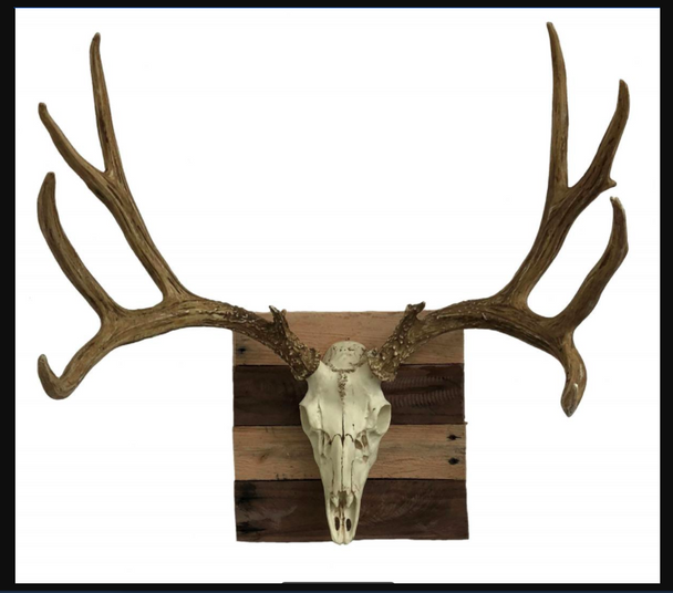 Faux Mule Deer European Mount