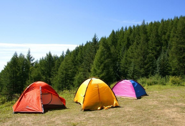 Three colourful tents pitched on the ground with pine trees in the distance