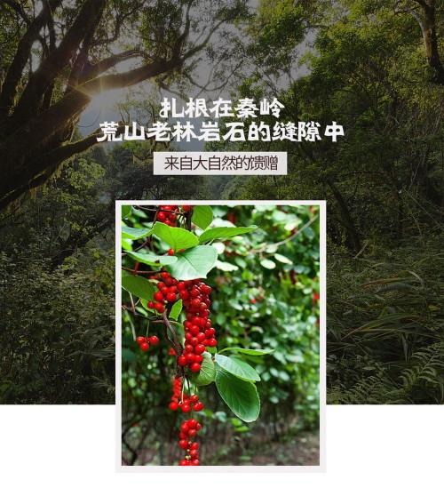 Organic Wild Dried Wu Wei Zi Schisandra Chinensis Tonic Five Flavours Fruit  Herb 500g