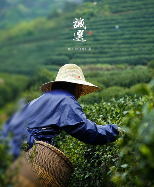 Top Grade Organic Hand Harvest Da Yu Ling Oolong 2600M High Mountain Taiwan Tea 500g