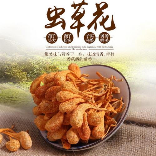 Organic Premium Super Large Mushroom Cordyceps Militaris Fungus Chong Cao Hua 500g
