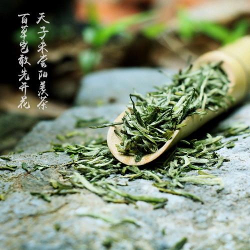 Organic Nonpareil Yixing Yang Xian Xue Ya Snow Bud Snowy Sprout China Green Tea 500g