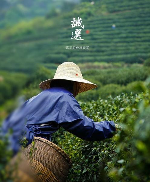 Top Grade Organic Hand Harvest Da Yu Ling Oolong 2600M High Mountain Taiwan Tea 500g