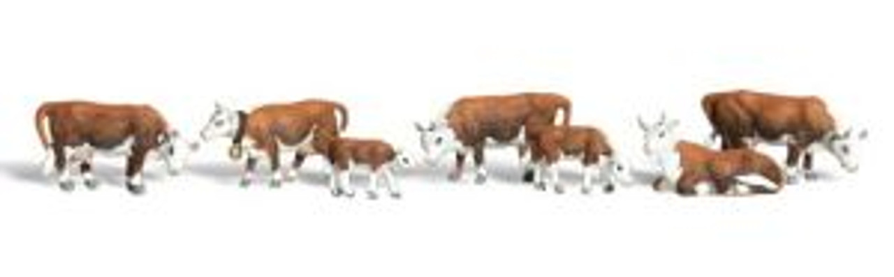 A1843 Hereford Cows HO