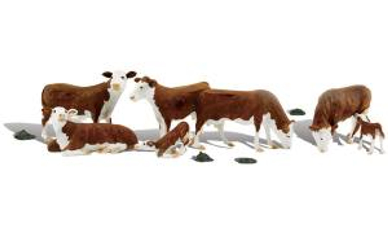 A2767 Hereford Cows O
