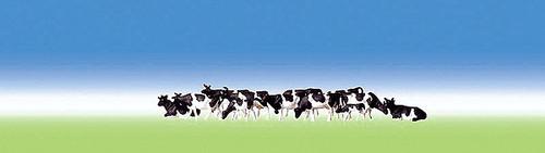 W272-158050  Cows -- Holsteins - Black & White