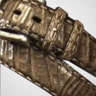 leathersouthamericancaiman.png