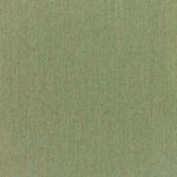 Canvas Fern 20 -- B - Canvas Fern