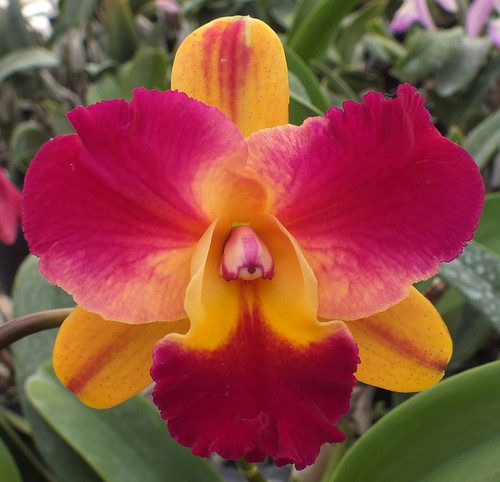 Blc. Odom's Tropical Splash.