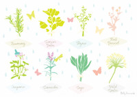 Illustrated hand drawn Herb collection scene art print by artist Holly Francesca.