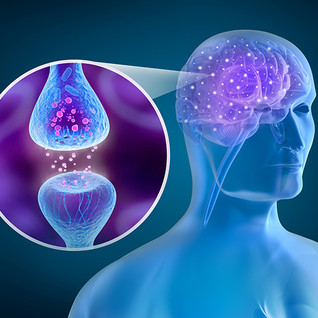 Endocannabinoid System: Interesting Things You Should Know About This Biological System.
