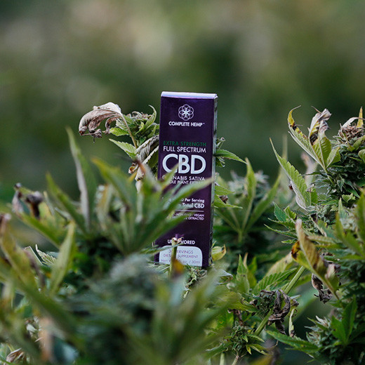 CBD Oil With THC: All You Need to Know