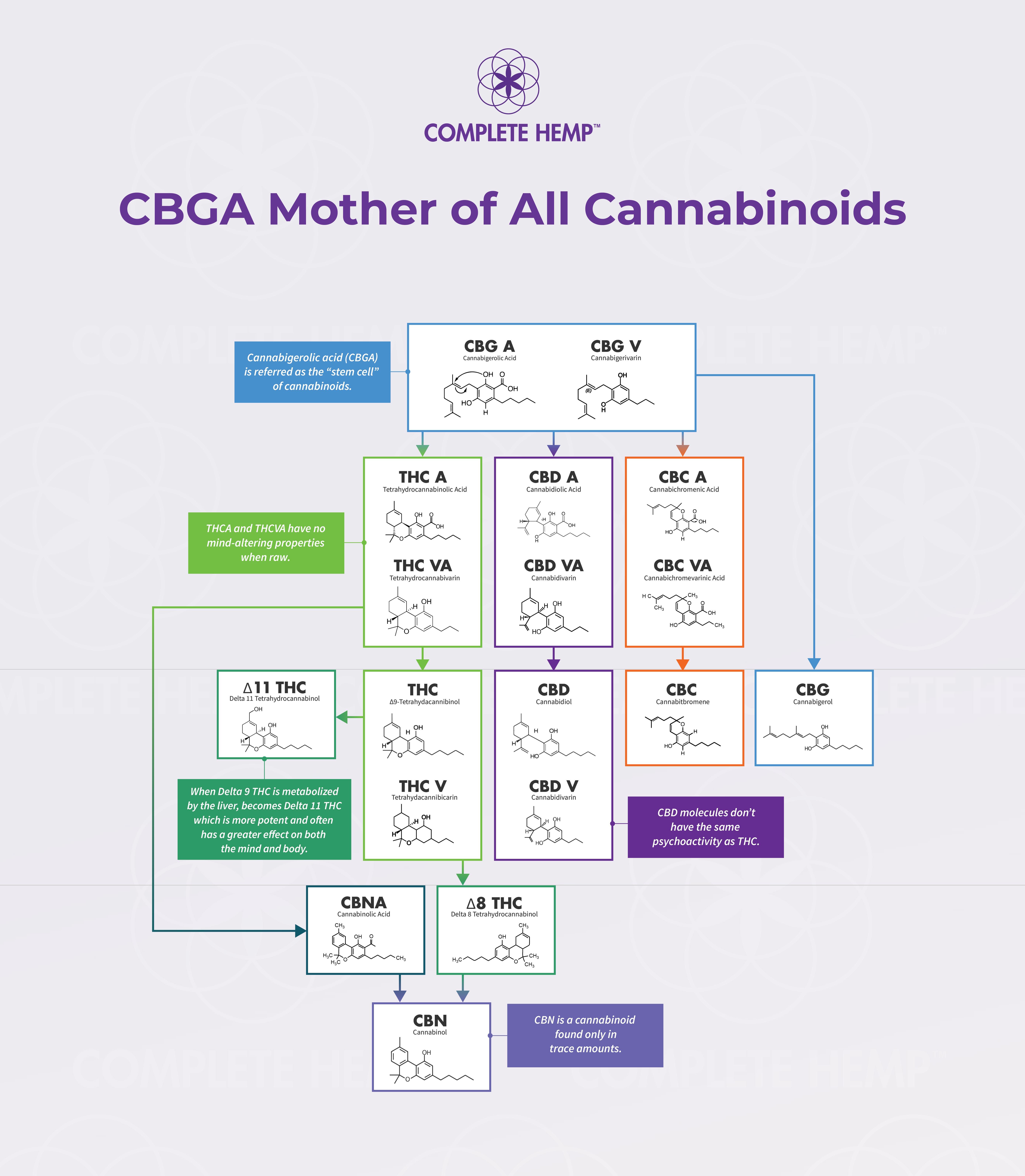 cbg-biosynthesis.jpg