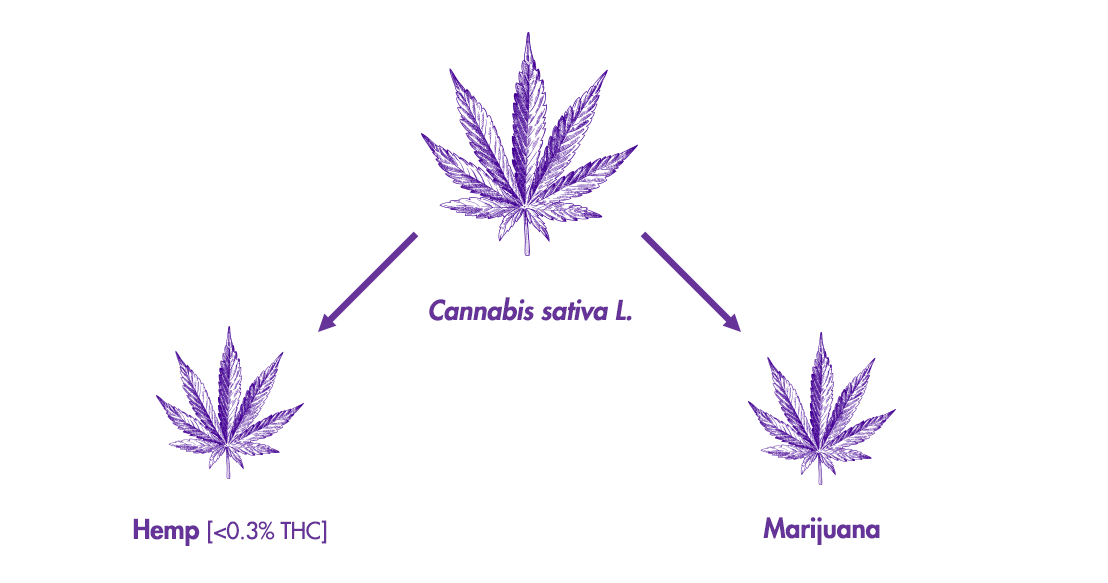 hemp-leaf-diagram.original.png