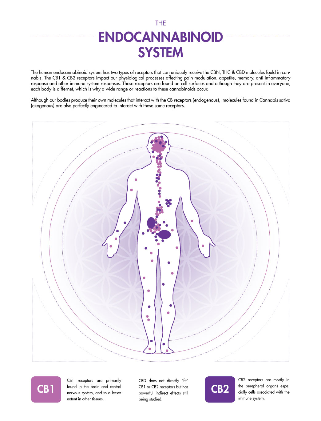 the-endocannabinoid-system-map-1.jpg