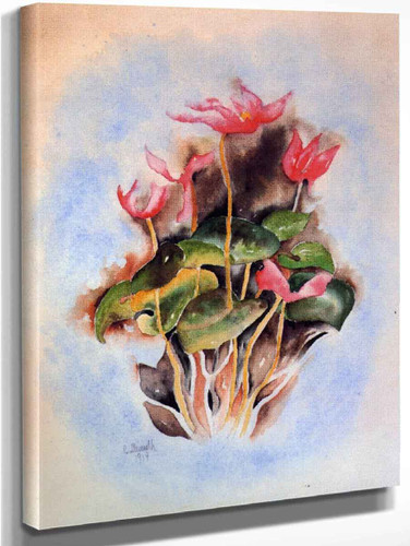 Pink Cyclamen By Charles Demuth By Charles Demuth