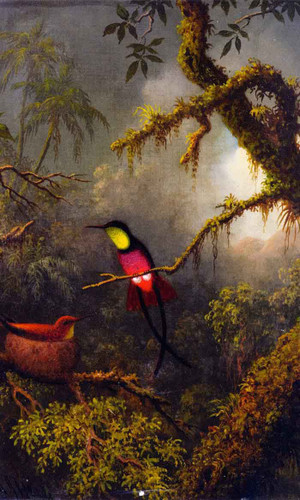 A Pair Of Nesting Crimson Topaz Hummingbirds By Martin Johnson Heade