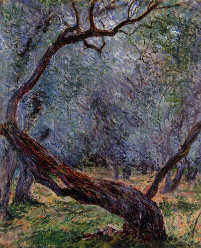 Study Of Olive Trees By Claude Oscar Monet