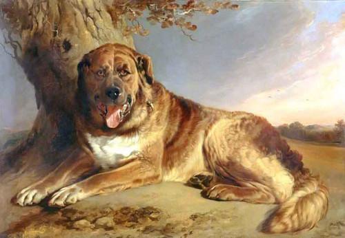 A Mastiff By Richard Ansdell