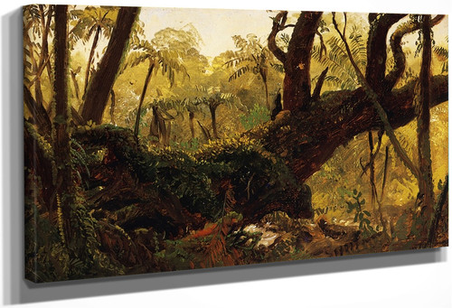 Rain Forest, Jamaica, West Indies By Frederic Edwin Church By Frederic Edwin Church