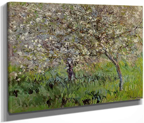Apple Trees In Bloom At Giverny By Claude Oscar Monet
