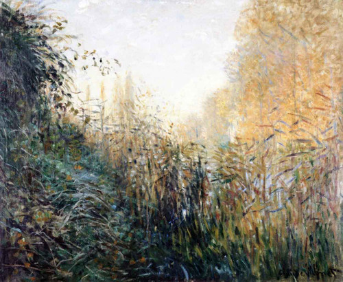 Study Of Rushes By Claude Oscar Monet
