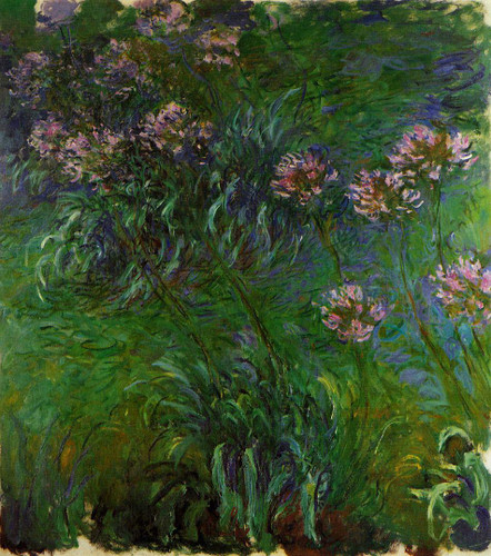 Agapanathus By Claude Oscar Monet