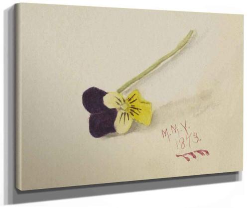Pansy By Mary Vaux Walcott