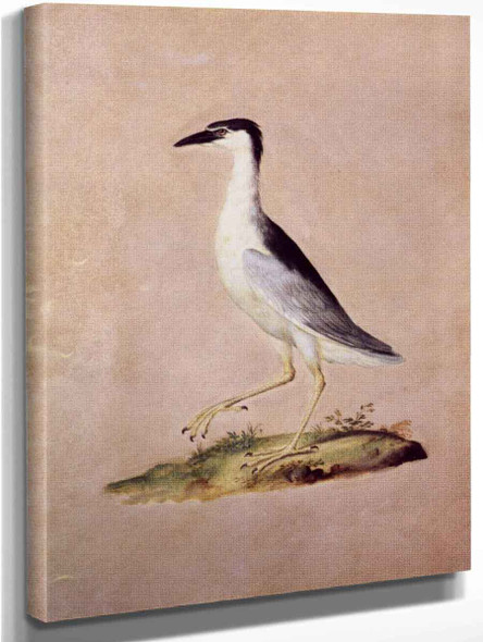 Night Heron By Giuseppe Arcimboldo