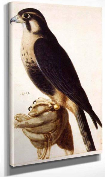 Aplomado Falcon On Gloved Hand By Giuseppe Arcimboldo