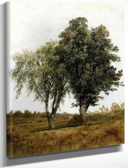 A Study Of Trees By John Frederick Kensett By John Frederick Kensett