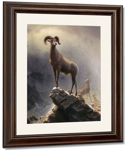 Rocky Mountain Sheep By Albert Bierstadt By Albert Bierstadt