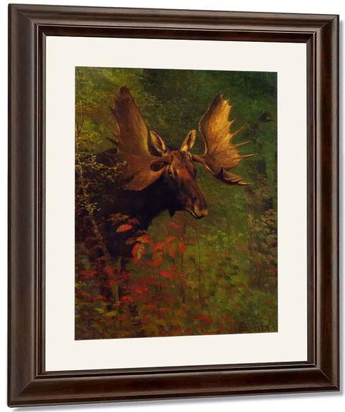 Study Of A Moose By Albert Bierstadt By Albert Bierstadt
