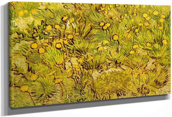 A Field Of Yellow Flowers By Jose Maria Velasco