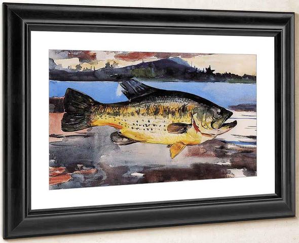 Bass By Winslow Homer