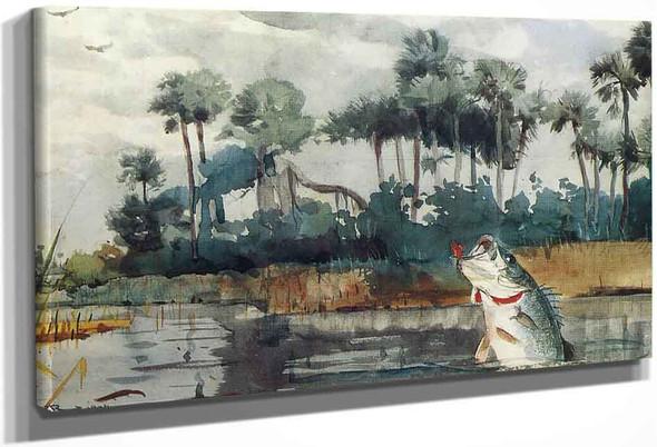 Black Bass, Florida By Winslow Homer