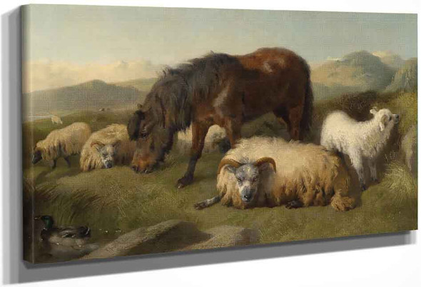 Sheep And A Pony By Richard Ansdell