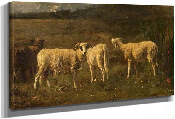 Sheep By Constant Troyon