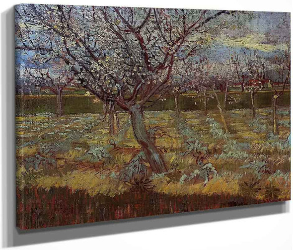 Apricot Tree In Bloom By Vincent Van Gogh