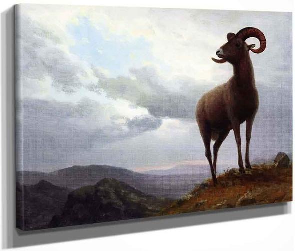 Long Horned Sheep By Albert Bierstadt By Albert Bierstadt