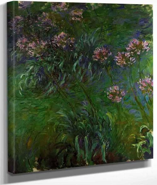 Agapanathus By Claude Oscar Monet