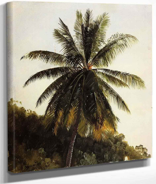 Palm Trees, West Indies By Frederic Edwin Church By Frederic Edwin Church