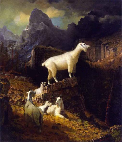 Rocky Mountain Goats By Albert Bierstadt By Albert Bierstadt