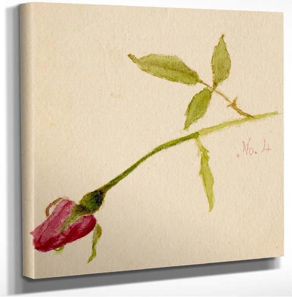 Rose Mary Vaux Walcott